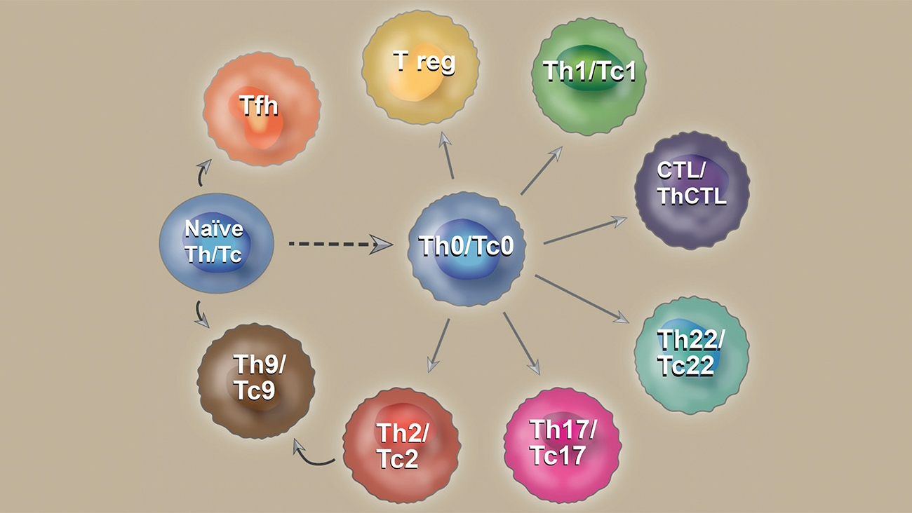 White Paper Describes Effects of Cytokines on T Cell Differentiation