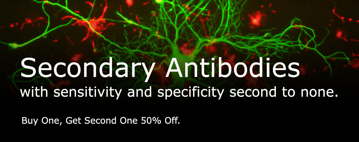 Secondary Antibodies Promo